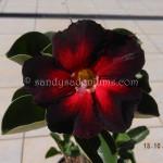1721 BLACK ROMADO (1)