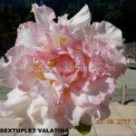 2730 SEXTUPLET VALATINA (2)-2