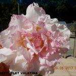 2730 SEXTUPLET VALATINA (4)-2