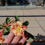 3047 DOUBLE STAR ADELENE