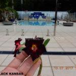 4D BLACK KANSAS ( EXTRA PETAL (1)-2