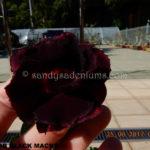5202 DOUBLE BLACK MACKA(2)-2