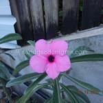 604 PINK LILAC SWAZICUM (1)