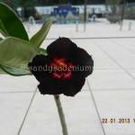 618 BLACK MOON (2)