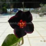 618 BLACK MOON (5)