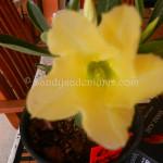 68B yellow (3)