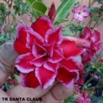 981D TRIPLE SANTA CLAUS (1)