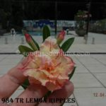 1984 TRIPLE LEMON RIPPLES $60 SOLD OUT